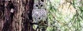 Owl Wars
