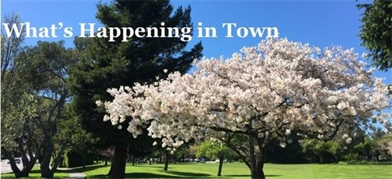 What's Happening in Town